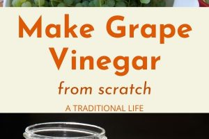 grapes and fermenting grape vinegar