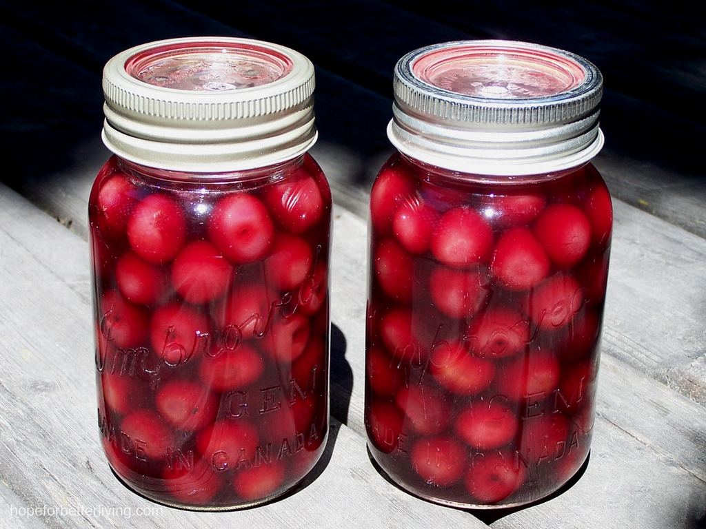Sweet cherries canned in cherry syrup