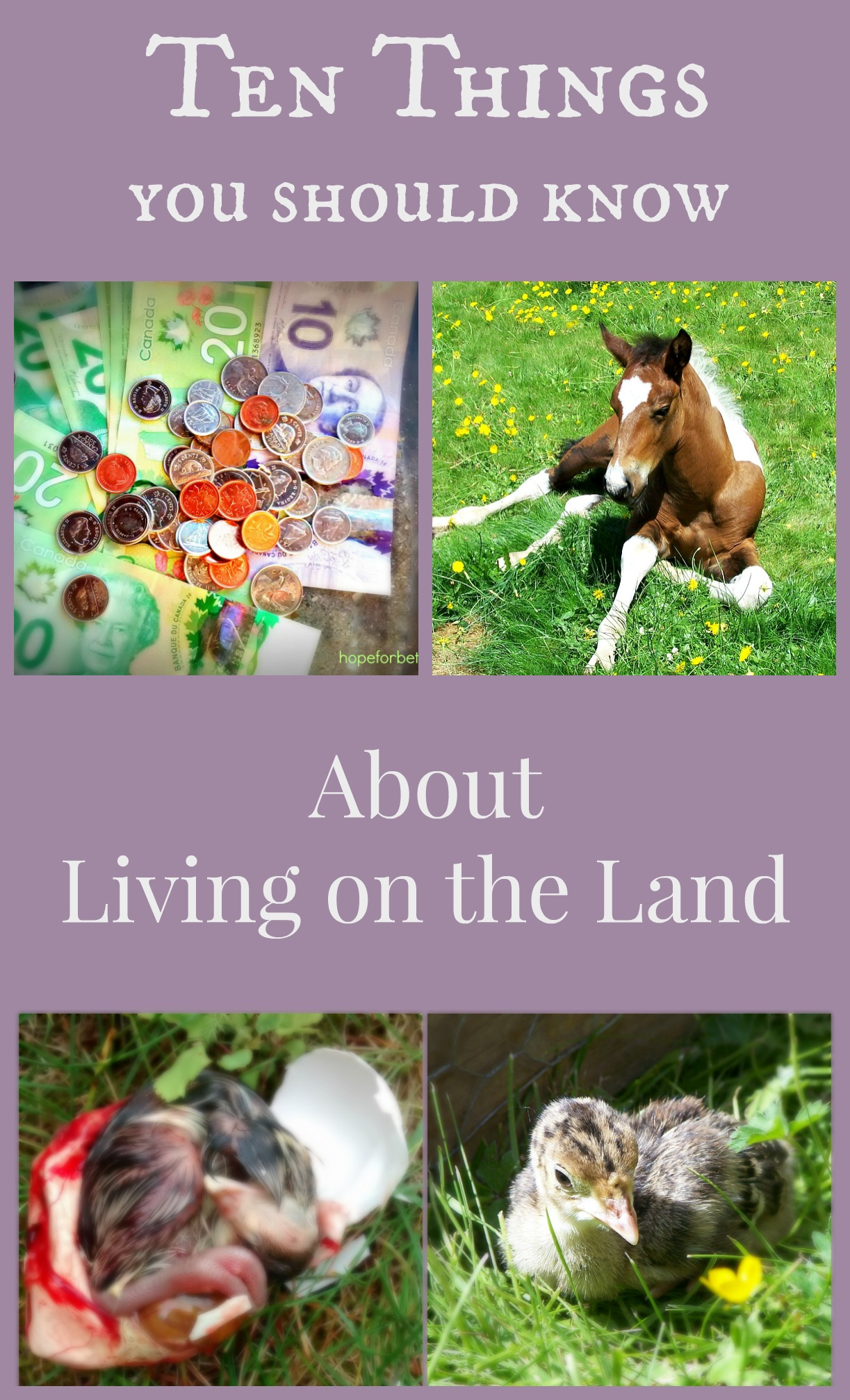 10 Things You Should Consider Before Homesteading