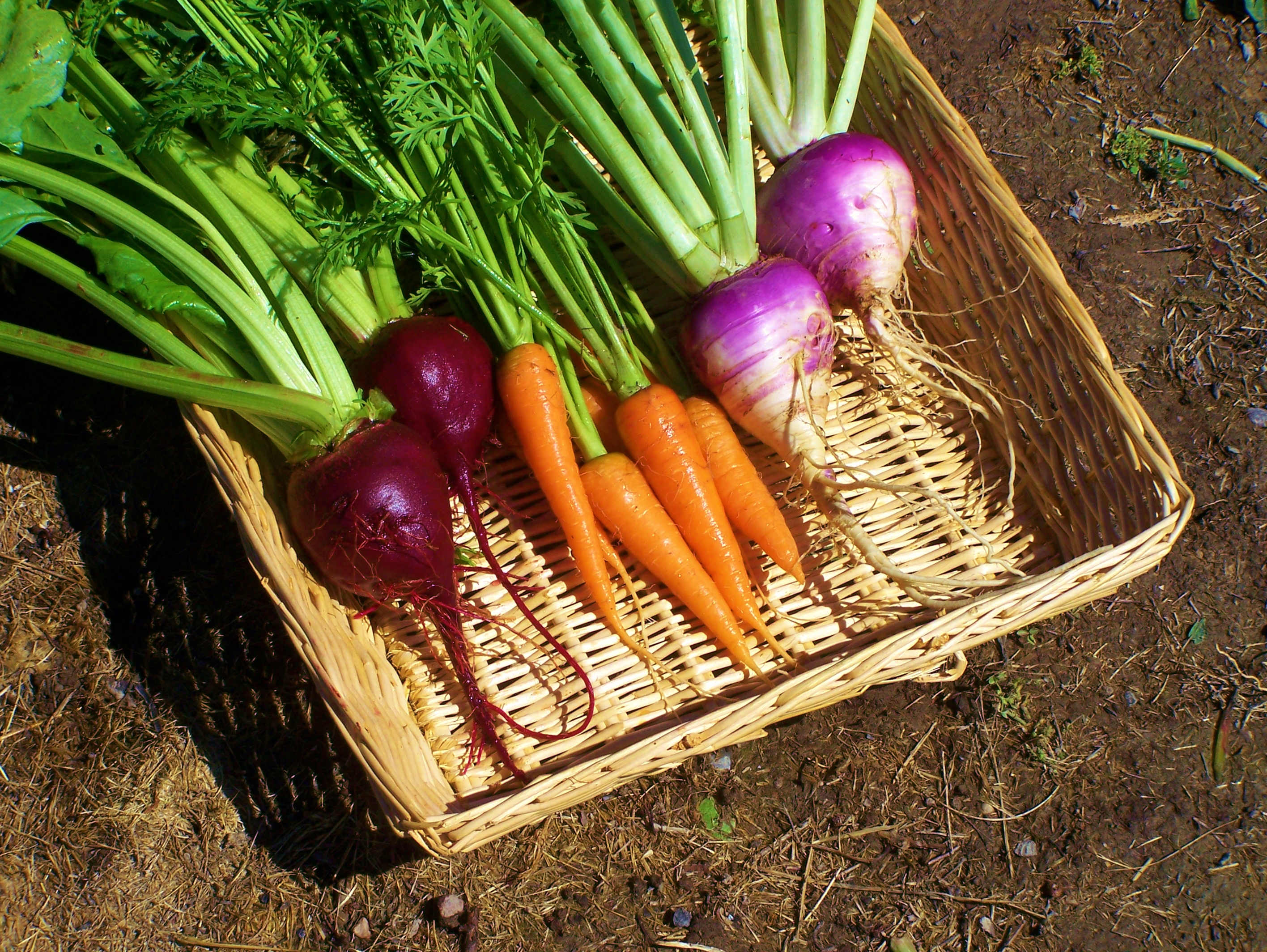 5 Ways for Urban Dwellers to Access Fresh Produce (without a Grocery Store)