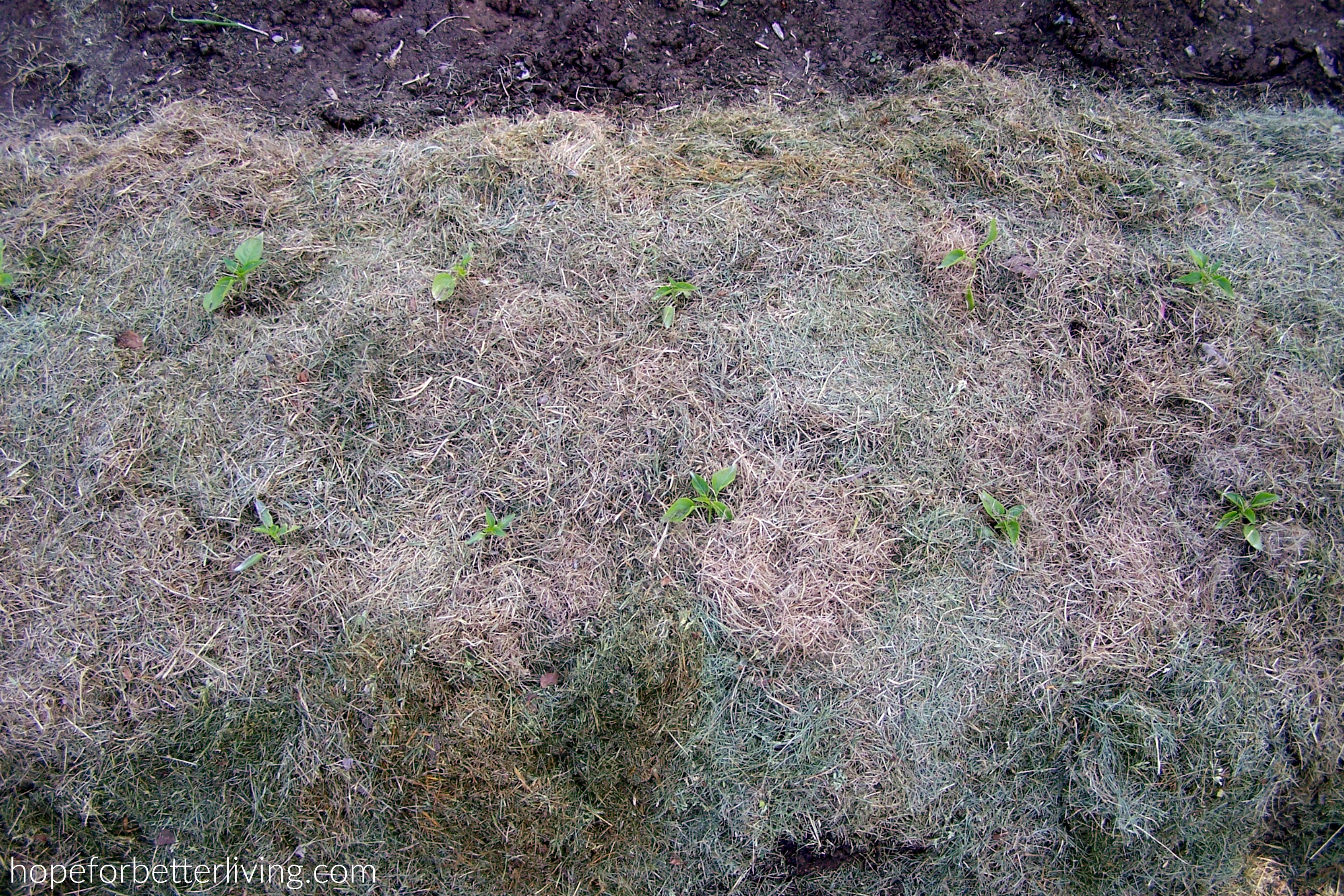 How to Mulch with Grass Clippings