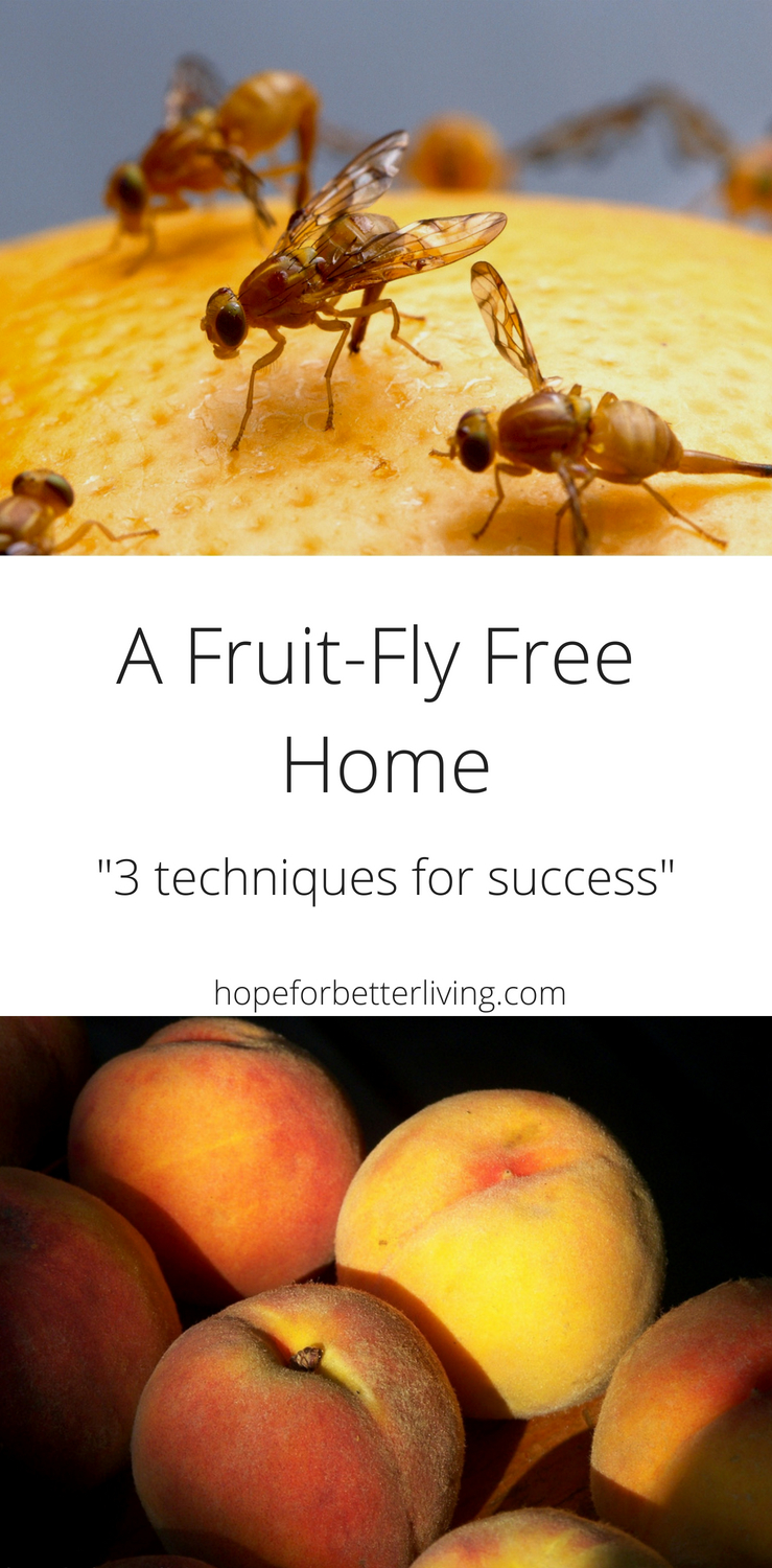 With the arrival of fruit season comes the annoyance of fruit flies! Here are 3 tips and also techniques that will help keep your home clear!