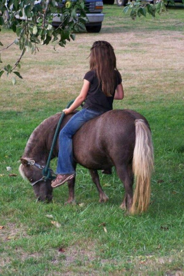 Young child riding miniature horse