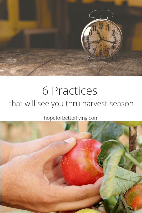 Are you overwhelmed with produce, harvesting and preserving? Here are 6 practices that will see you through!