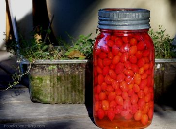 A Rose Hip Infused Vinegar