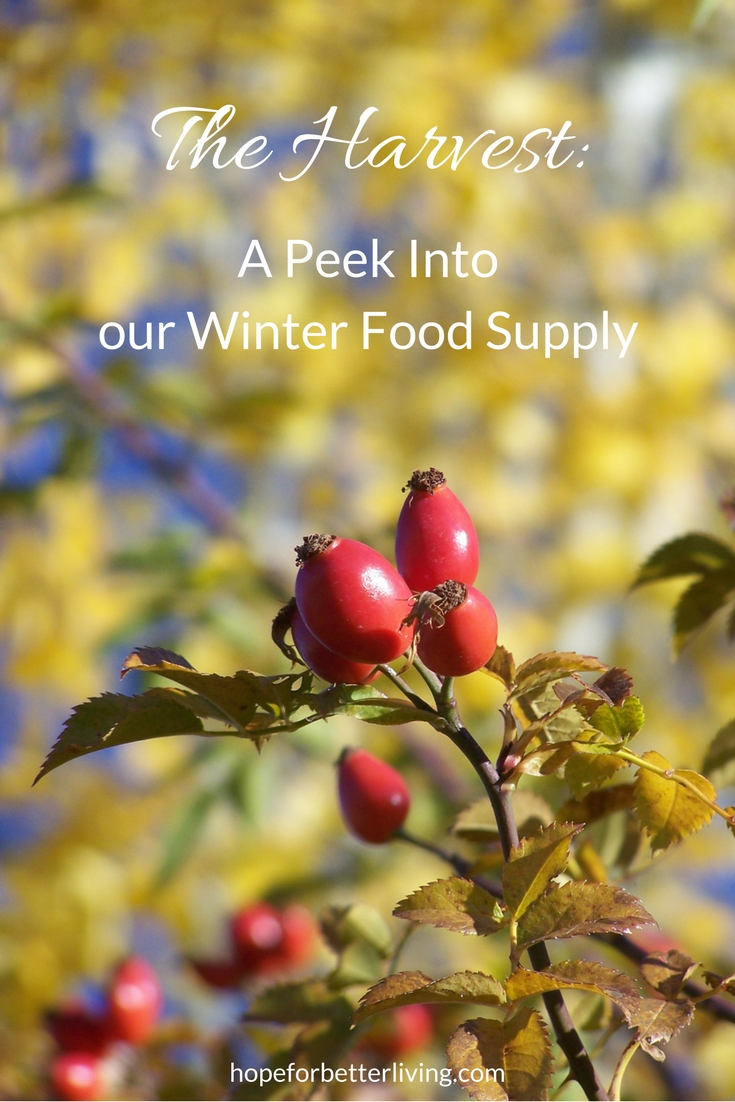 Raised, harvested and put by, here's our winter food supply!
