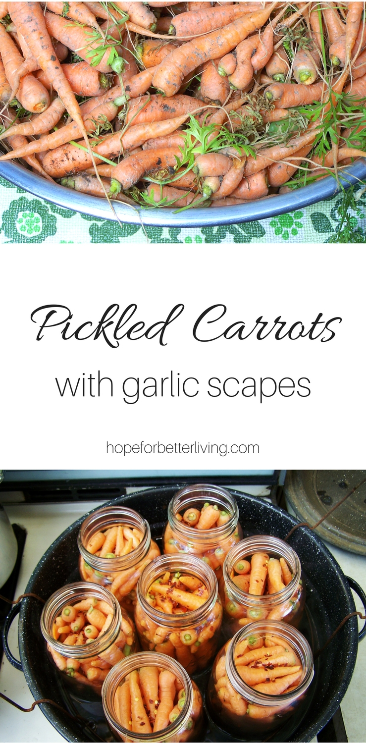 Canning pickled carrots is simple. Combine your garden thinnings with garlic scapes for a delicious side dish!
