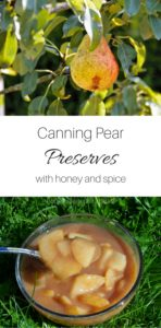 Have a surplus of pears? Make this honey sweetened, pectin free canning recipe!