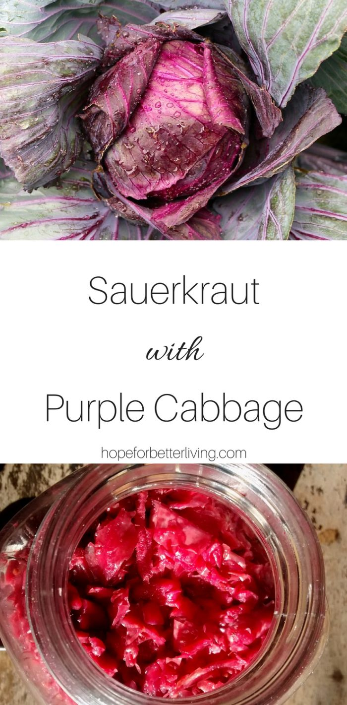 Use your purple cabbage to make this delicious sauerkraut recipe!