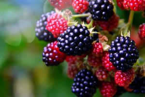 Blackberry Cordial Sweetened with Honey