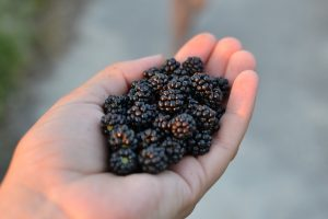 Black Berry Cordial with Honey