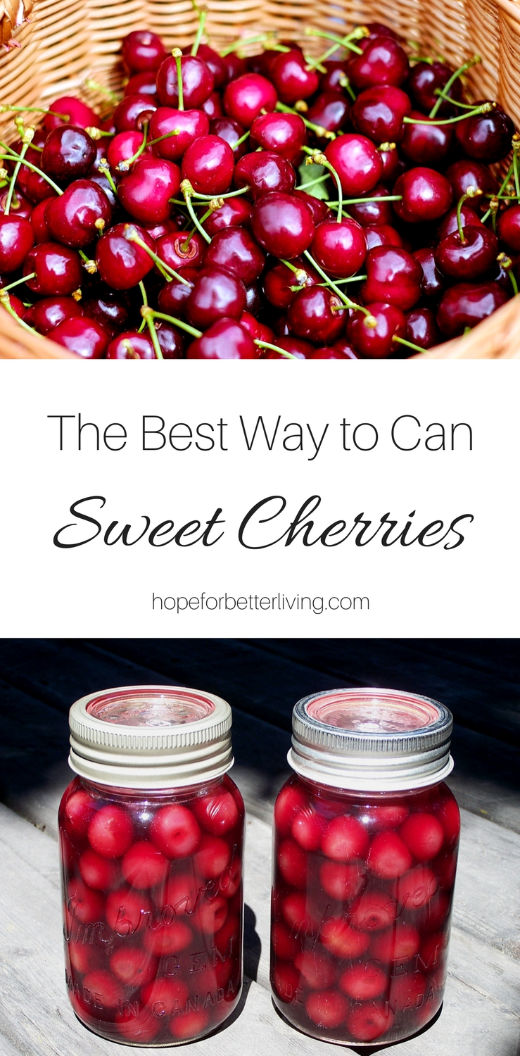 One of the most delicious ways to can sweet cherries is in cherry juice! Cut back on the sugars, sweeten with natural honey and you'll have home canned cherries that are rich in fruit flavor!
