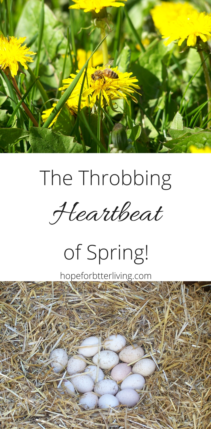 When the throbbing heartbeat of spring arrives, suddenly raising your own food becomes worthwhile!