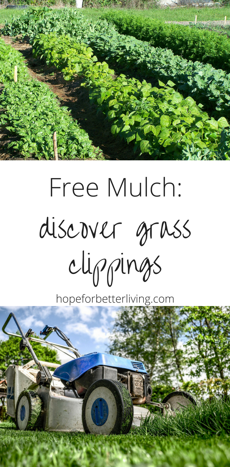 What's not to love about free mulch?! Here's how you should prepare grass clippings before using them on your garden!
