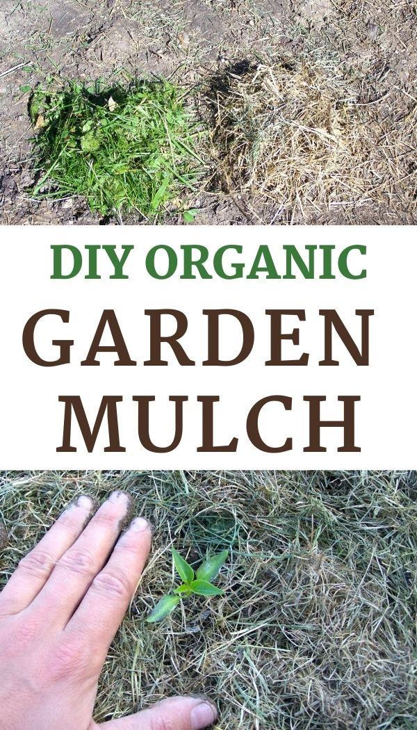 The best vegetable garden mulch grows right in your front lawn!