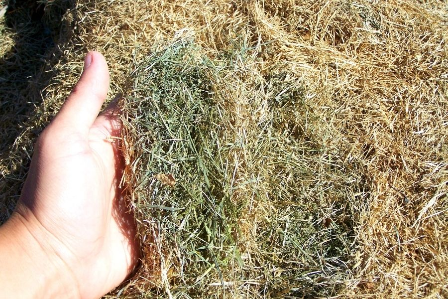 a handful of nicely dried grass clippings