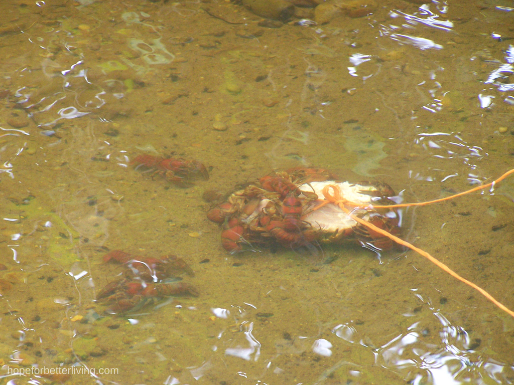 Catching Crayfish in Farm Kid Style