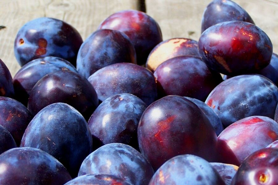 Fresh purple plums in a glass bowl