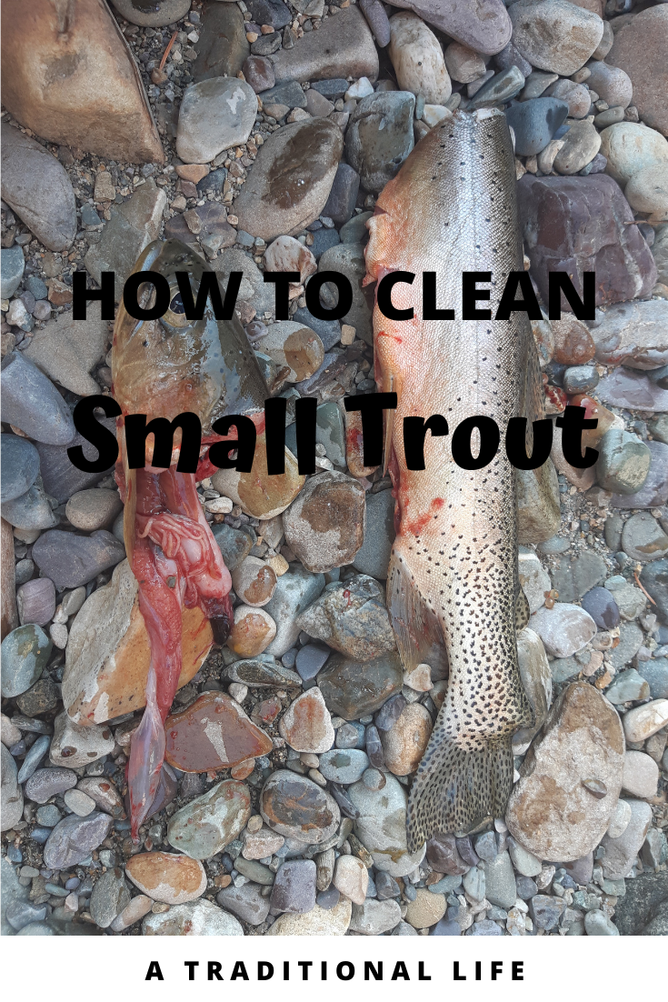 Tips for cleaning small trout