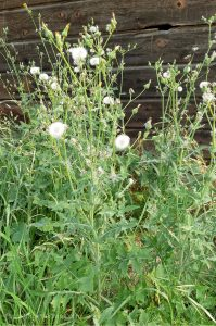 What Do Sheep Eat: A List of Plant Types