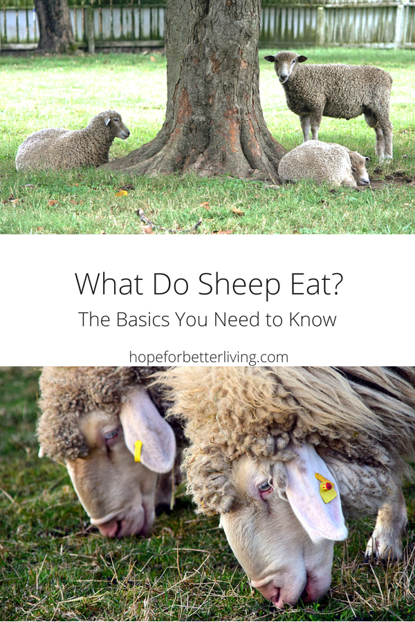 What do sheep eat? Here's a list of plant types we've observed!