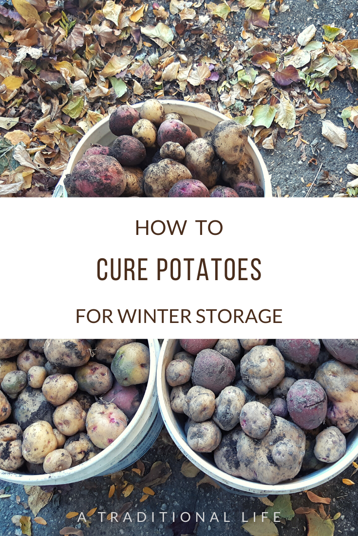 How to Cure Potatoes for Storage