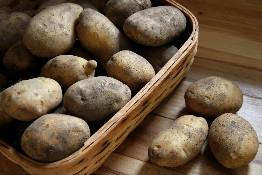 a basket of russet potatoes that have been cured for storage