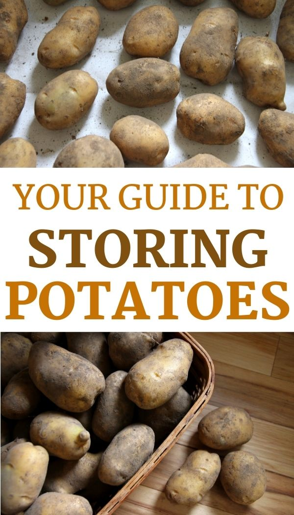 Want to learn how to store potatoes for winter? Here's a step by step guide!