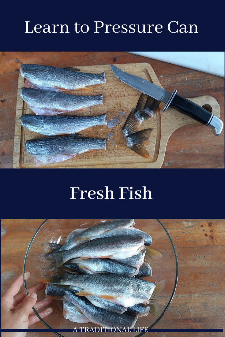 A pressure canning recipe for fish