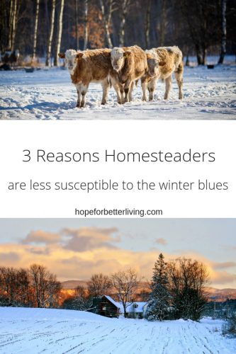 3 Reasons the homesteader often struggle less with winter blues