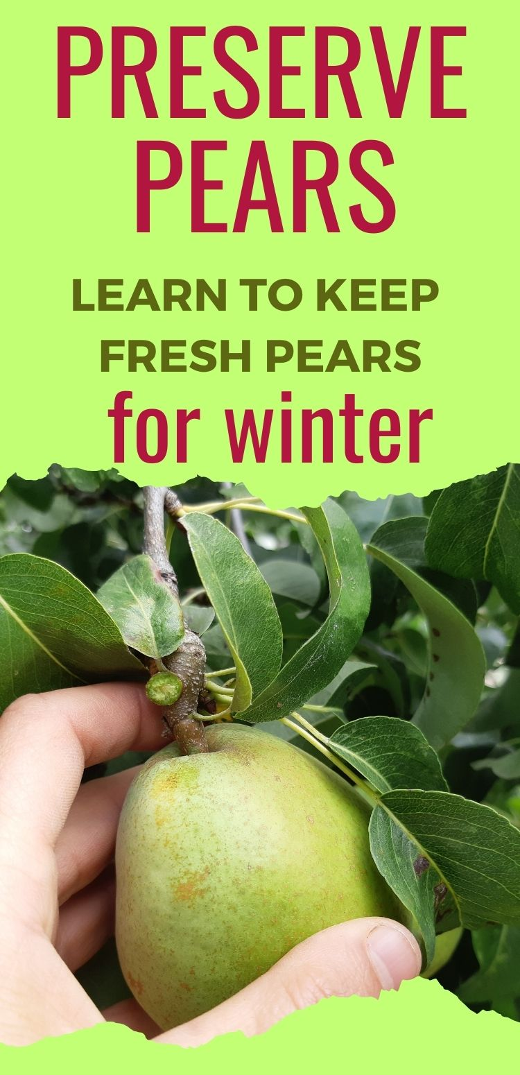 Preserve pears without canning them! Here's how you do it.