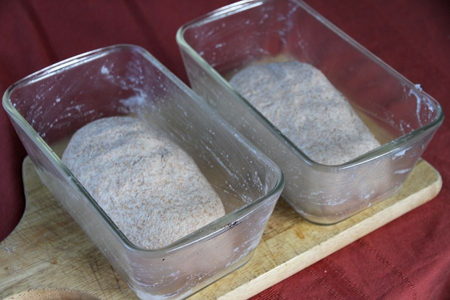 whole wheat dough left to rise in bread pans