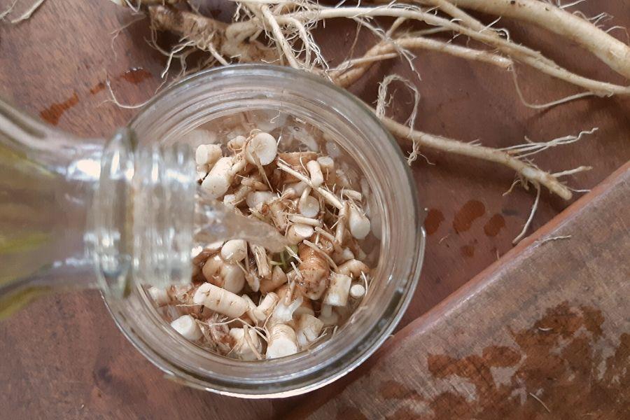DIY Dandelion Root Tincture