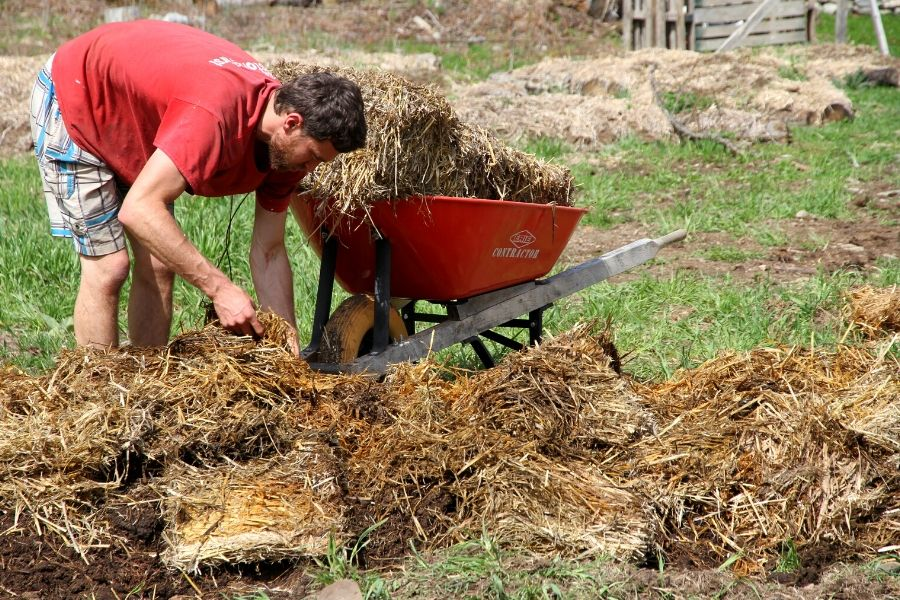 a man putting down straw mulch on raised garden beds