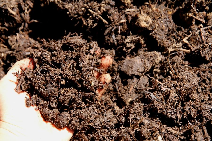 a hand holding moist, composted soil