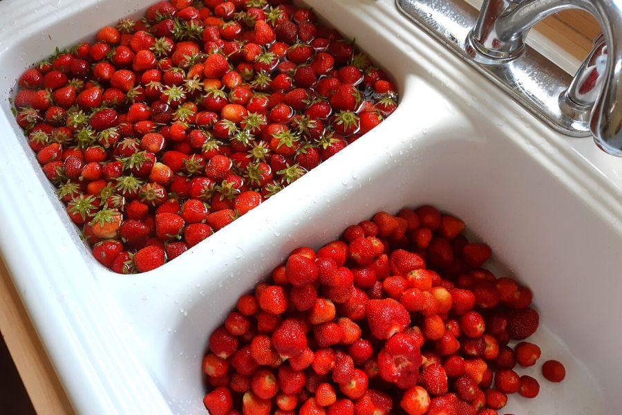 A sink full of freshly harvested strawberries