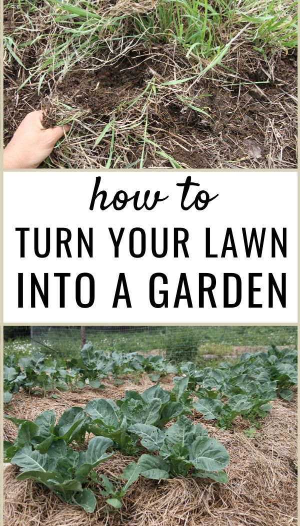 Learn how to create a vegetable garden in your lawn!