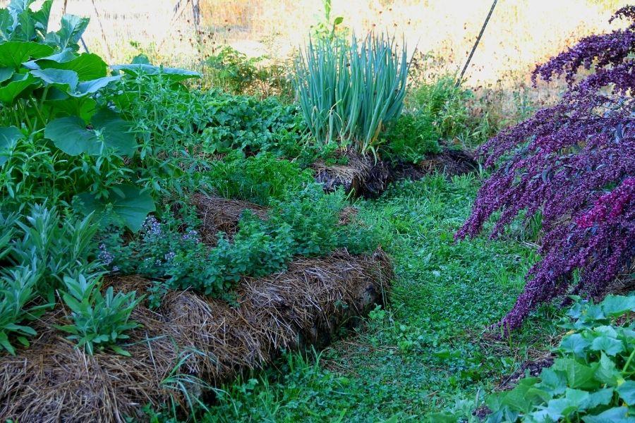 A grassy pathway through hugelkultar gardens