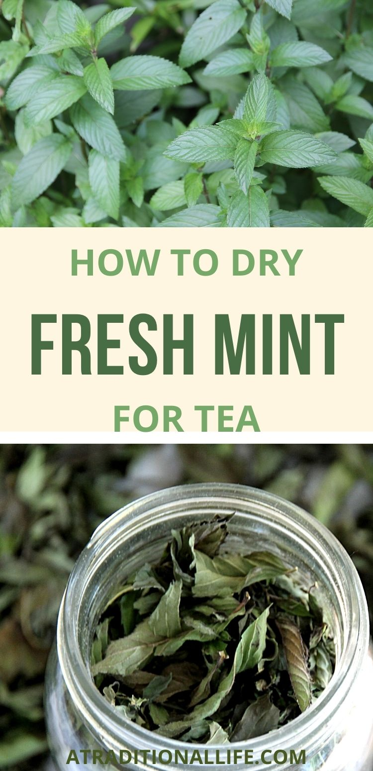 fresh and dried mint for making tea