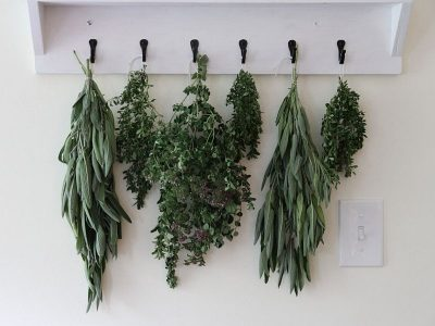 A row of herbal swags waiting to dry in the kitchen