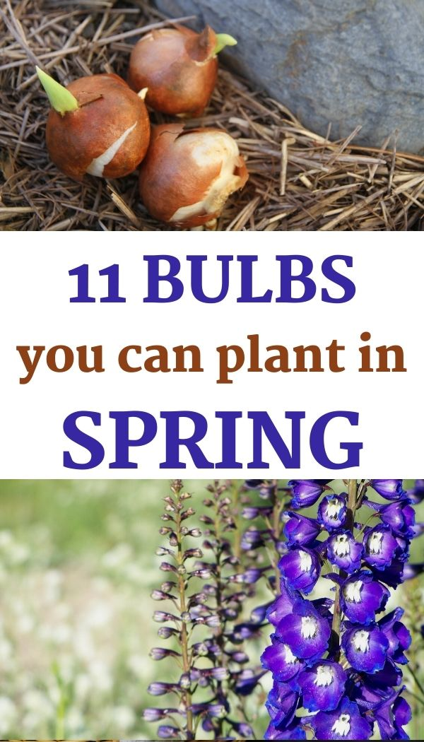 Get a list of 11 bulbs that flower in summer!