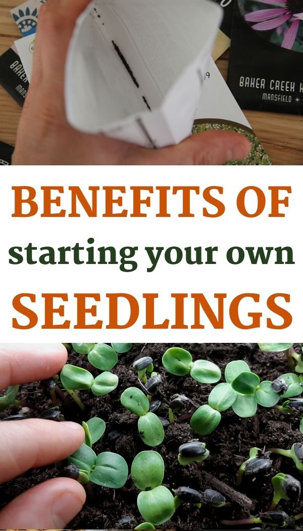 Starting seedlings inside has 5 key benefits! Here they are.