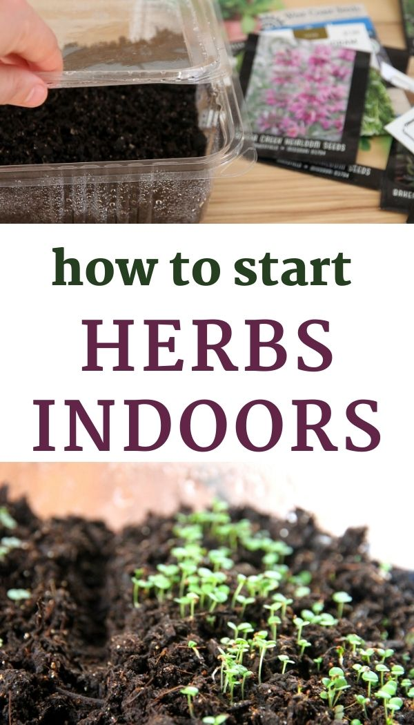 Learn how to start herbs from seeds indoors!