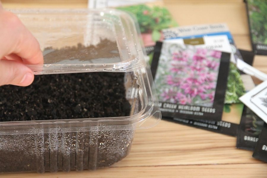 a clear plastic tray with lid for starting seeds