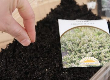 a container of potting soil being sowed with seed