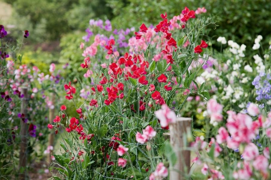 10 Cut Flowers You Can Start From Seed