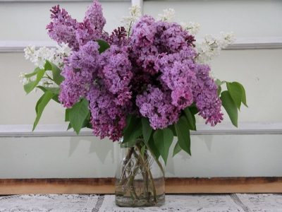 a mason jar filled with lavendar and white lilacs