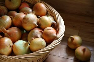 A basket of onions that have been harvested, cured and are ready for winter storage